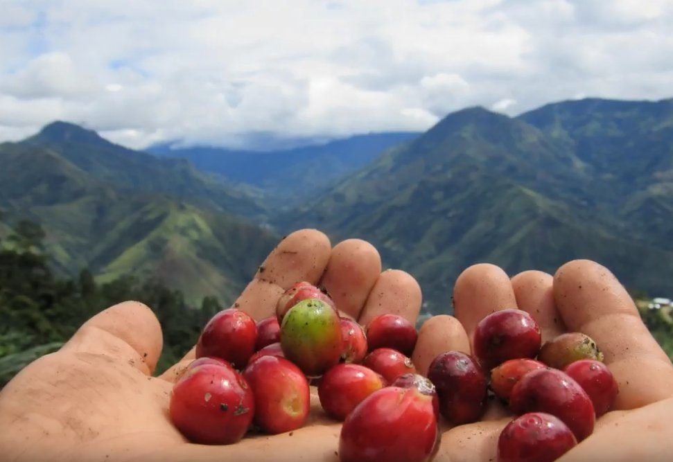 Peru cherry beans - Beyond Fairtrade Coffee - Blue Goose Compostable Coffee Capsules Pods
