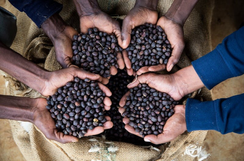 Sourcing Ethiopia Coffee Yirgacheffe - Blue Goose Best Eco Coffee Pods Nespresso