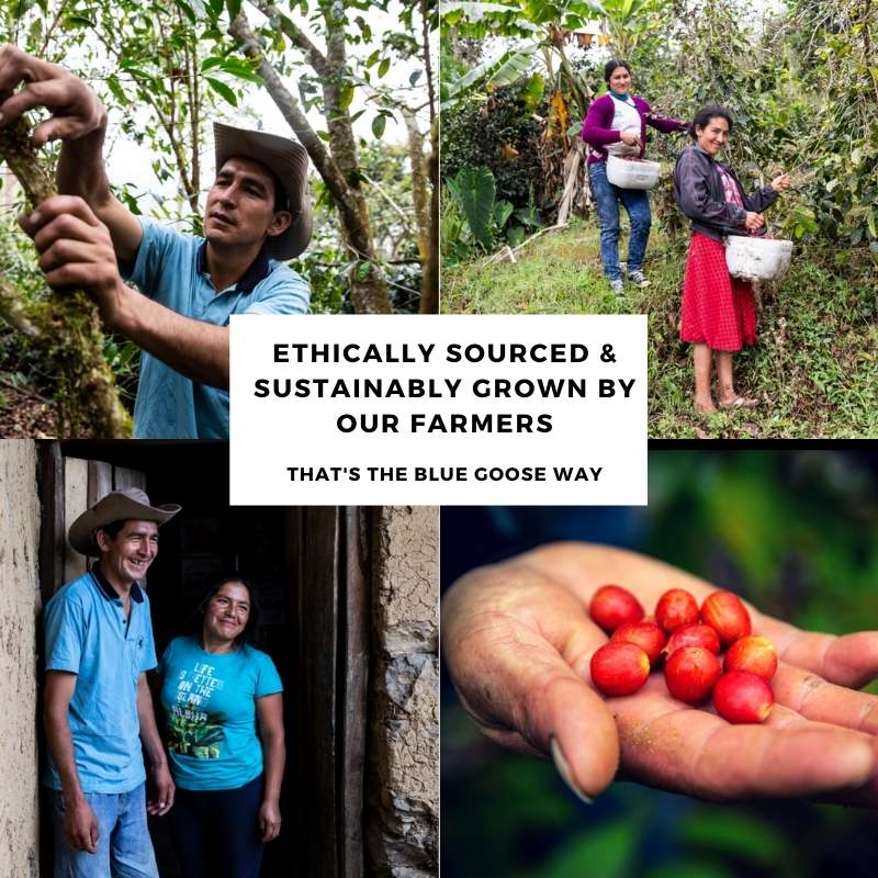 Ethically sourced speciality grade arabica - Blue Goose Eco Coffee pods Bean & Ground compostable pouches 5